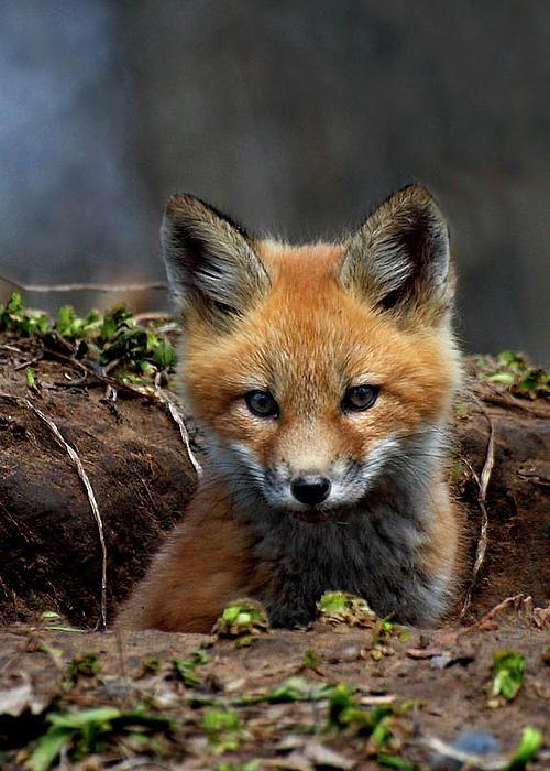 By Thomas Young. #animal #fauna