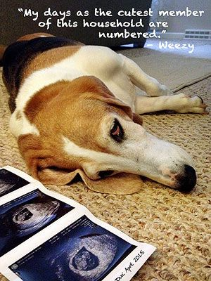 Our Favorite Pregnancy Announcements With Pets!: Time to Share the Throne (via Parents.com)