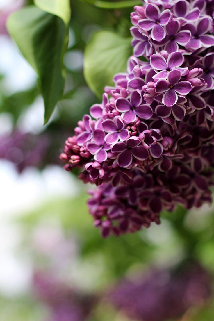 best floral images on pinterest beautiful flowers floral