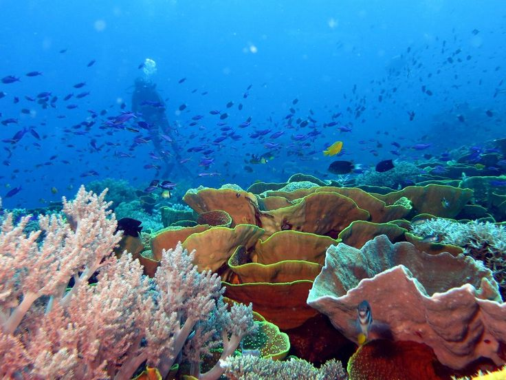 Spectacular coral growth at Tufi Dive Resort, Papua New Guinea