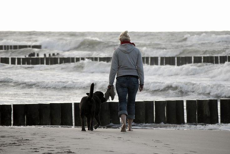 Poland, Ustronie Morskie, dog on the beach