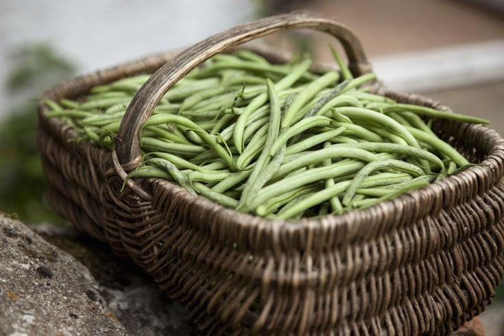 Low in Carbs, High in Nutrition: Hurray for Green Beans!