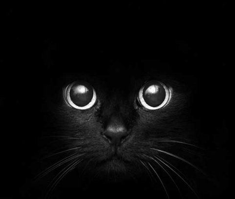 They are seeing more than you see, They are hearing more than you hear, And out of the darkness they peer. With a goblin light in their eyes! -Elizabeth Coatsworth