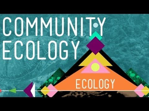 ecology coursework At the university of wisconsin-stevens point, you can learn to work in wildlife ecology at the interface of wildlife species, the environment and humans.