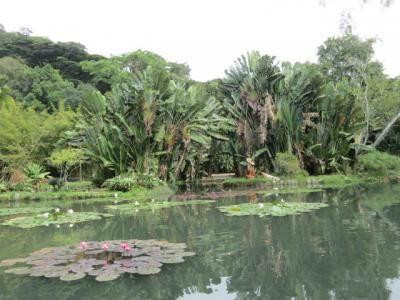 Rio de janeiro jardin botanique 35