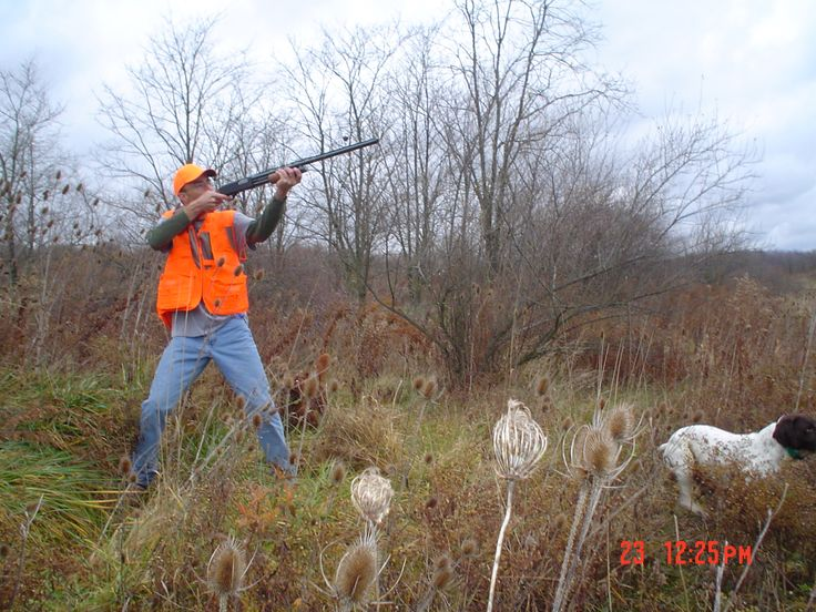 7 best Mt. Hope Game Preserve Hunting Dogs images on ...