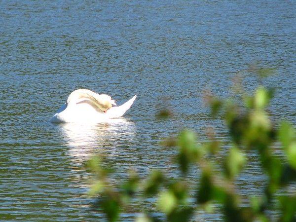 Grace..at sea..swan series by Heli Aarniranta on ARTwanted