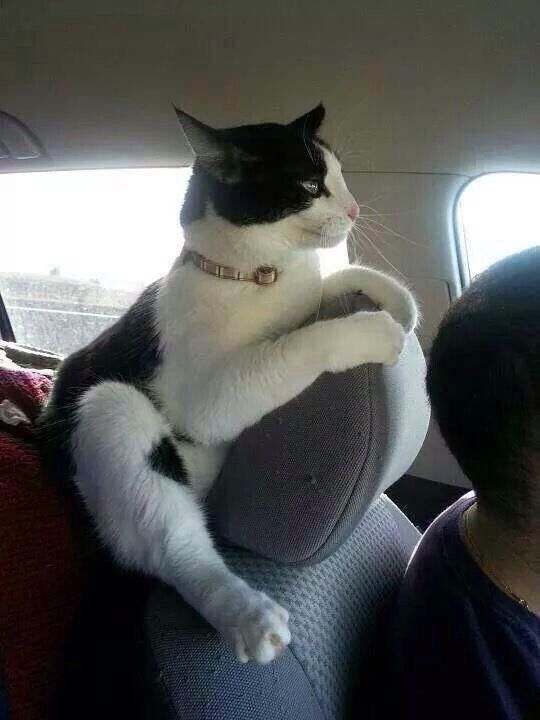This cat is definitely enjoying the ride lol