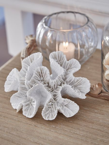 Add a lovely coastal feel to your home with this faux treasure from the sea!