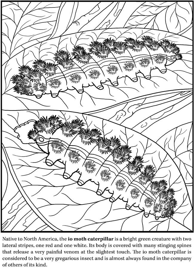 Deadly Insects and Arachnids Coloring Book Dover