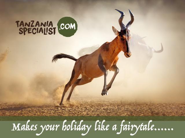 Wildlife safari tour in #Tanzania. Make a fairytale holiday in #Tanzania