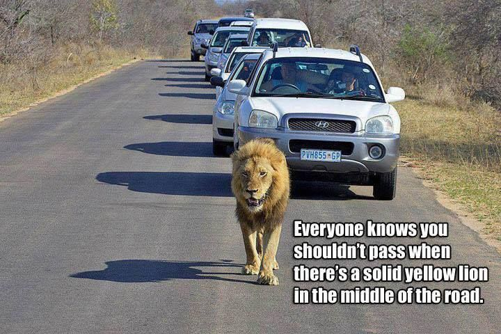 South Africans drivers obeying their traffic laws.