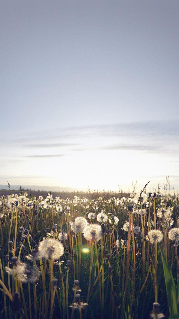 Iphone wallpaper tumblr nature - Nature Love Flower Dandelion Iphone 6 Wallpaper