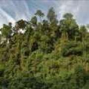 (Brazil) Rainforest Action Network | Environmentalism with teeth.