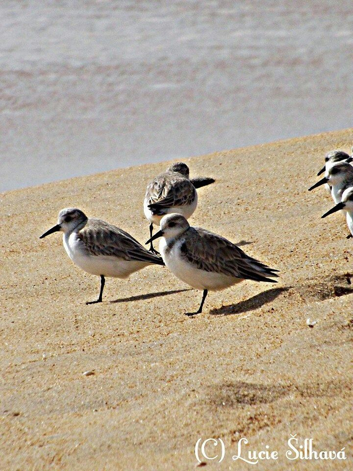'One leg birds'