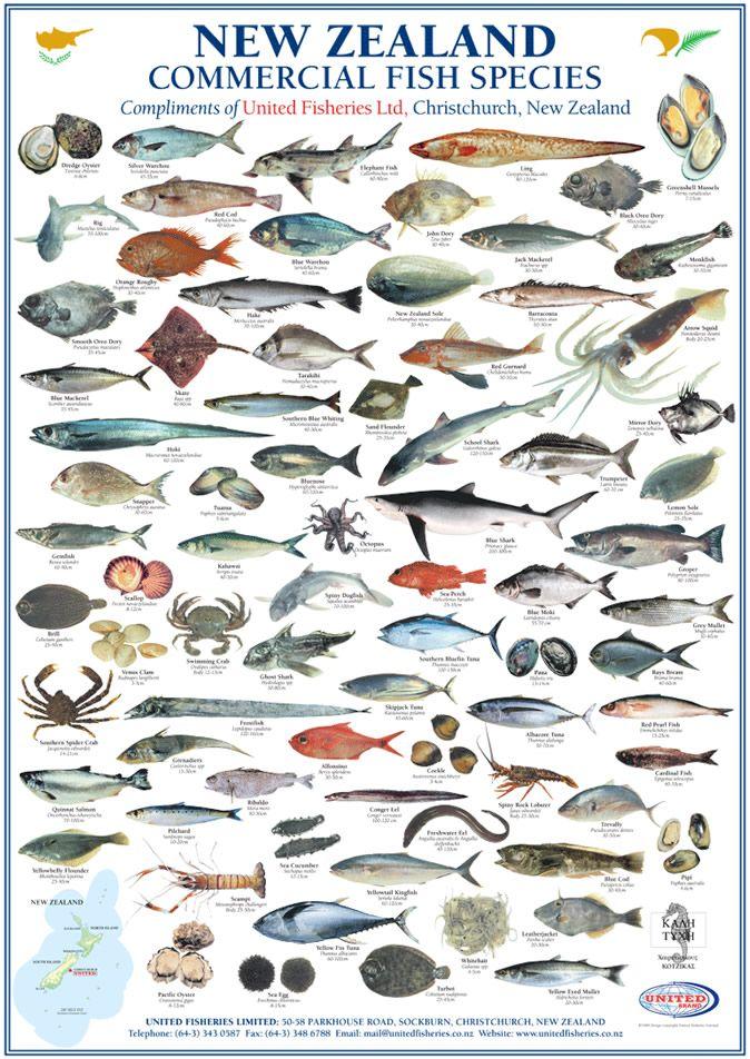 17 best images about kiwiana on pinterest maori designs for Alaska fish species