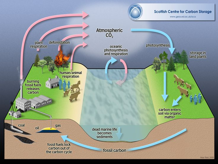Simplified Sinks and Sources of the Carbon Cycle Carbon