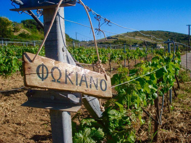Lipsi Winery vineyard sign