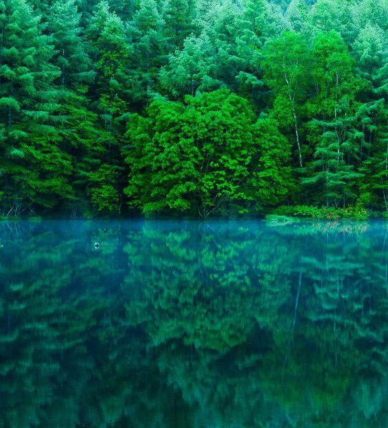 長野県:早朝の御射鹿池