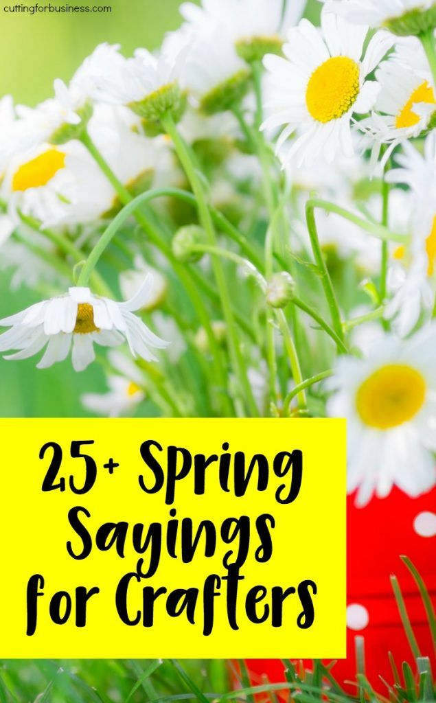 25+ Spring Sayings for Crafters - Perfect for Silhouette Cameo or Cricut Explore Business Owners - by cuttingforbusiness.com