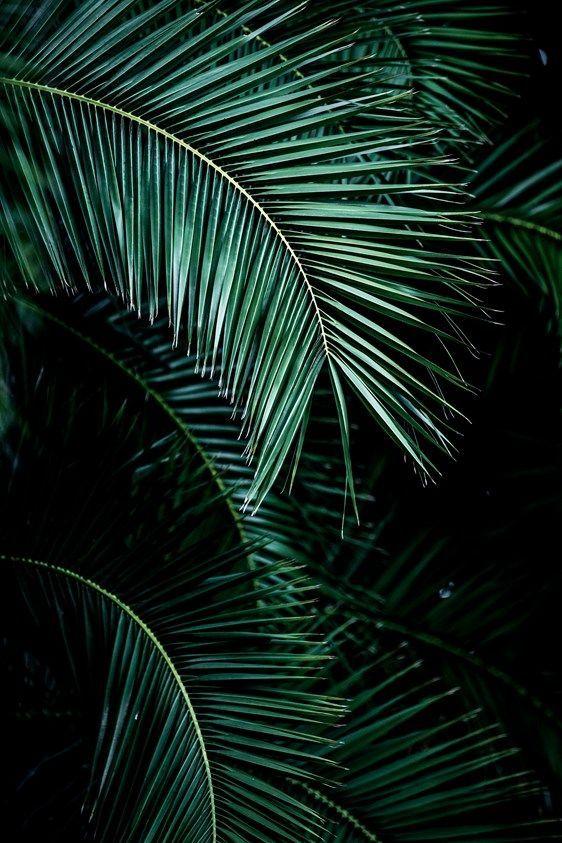 Palmblätter 9 –