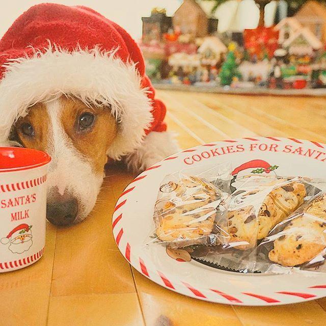 Dear Santa Milk and Japanese crackers for you🐾  サンタさんへ ミルクと日本のお煎餅どうじょ🐾 #クリスマス#カウントダウン#ジャック#ジャックラッセル#ジャックラッセルテリア#愛犬#サンタ#犬#アパレル#犬服#ハンドメイド#jackrussell#jackrussellterrier#ilovemydog#ilovejrt#ilovemydog#ilovedog#mydog#myfamily#ilovedogs#dog#dogs#Christmas#countdown #dogstagram#instadog#igdogs#jrt#jrts#Kojiro