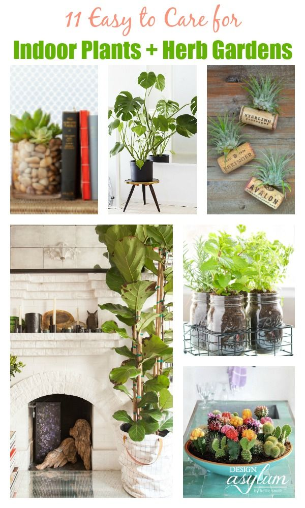 17 best images about cooking baking tips on pinterest for Easy to take care of outdoor plants
