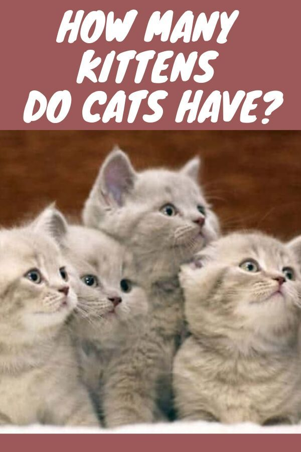 Adding Up The New Additions How Many Kittens Do Cats Have Cat Having Kittens Kittens Kittens Funny