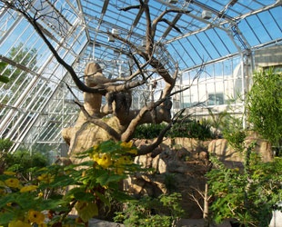 The Spiny Desert Of Madagascar Cleveland Botanical Gardens Things To Do In Northern Ohio