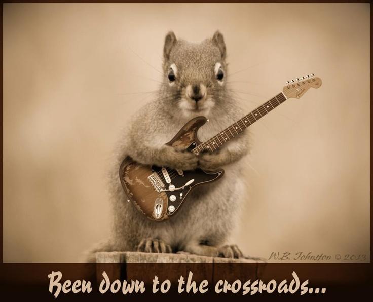 Ericclapton Squirrel Guitar Rockin Animals
