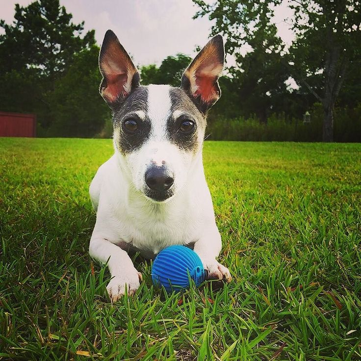 """The Series comes in 3 sizes for dogs. Each ball has more than 20 different wisecracks or sounds, like """"Rock 'n Roll Big Doggy,"""" """"Hey, What are you doing?,"""" """"Grrrrr!,"""" """"Sweet Puppy,"""" and many more!"""