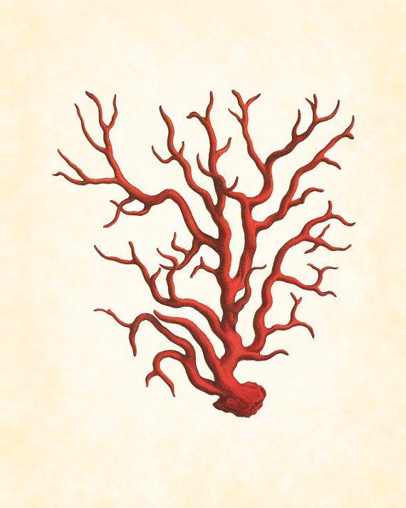 Vintage Red Sea Coral Plate 1 Natural History por BelleMerGraphics