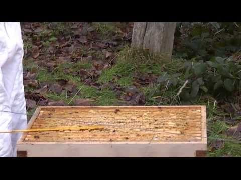 198 best Bees are Amazing!   Beekeeping images on Pinterest - fresh apiary blueprint examples