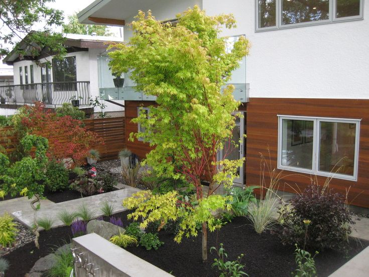 Natural Japanese Modern Landscape Sumptuous Coral Japanese Maple Look Vancouver Modern Landscape Decorators Wit