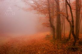 Tajomný les na Šachtičkách