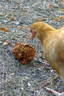 Homemade Treats for Chickens