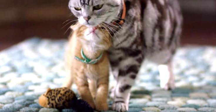These Dear Kitten Friskies Videos Give Me Some Serious Smiles! Here's A New One… | The Animal Rescue Site Blog