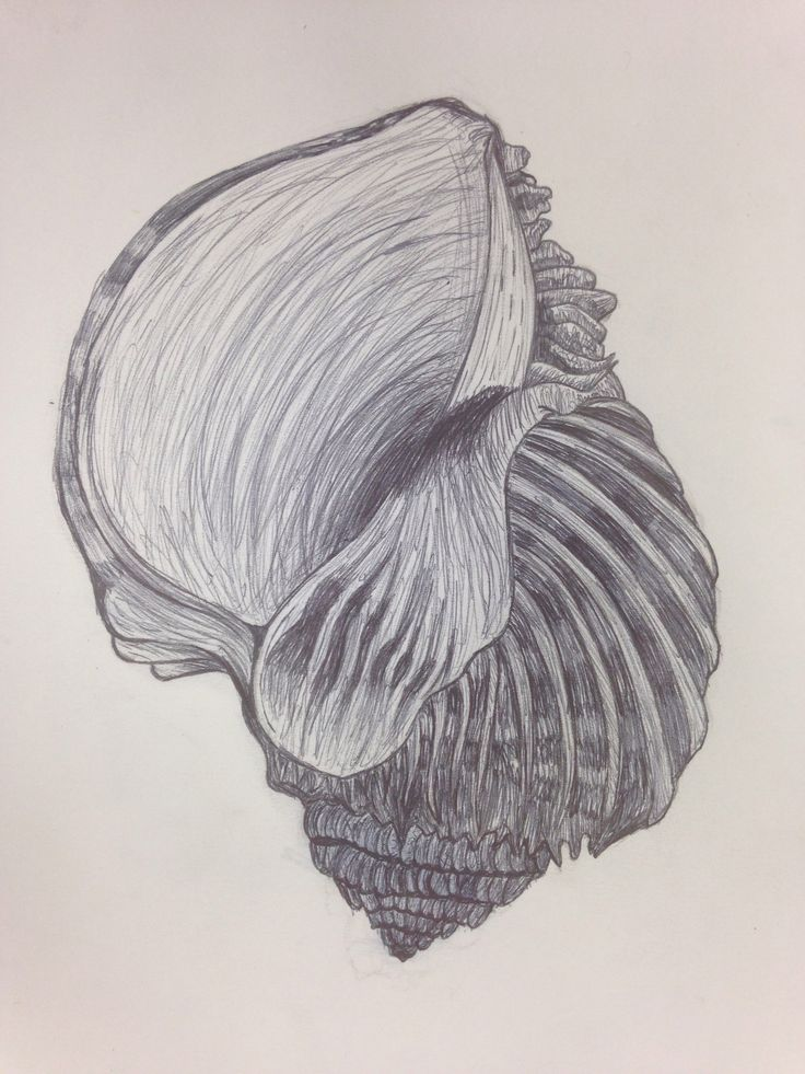 Tia. Shell biro drawing. Lesson 1 | Line | Pinterest | The ...
