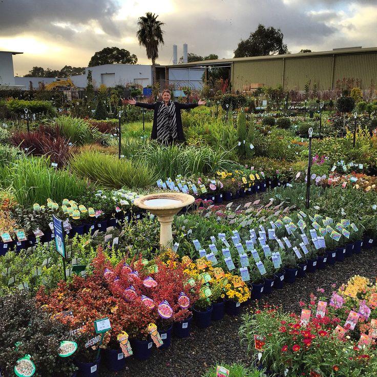 Wholesale Plants www.eastendflowermarket.com.au