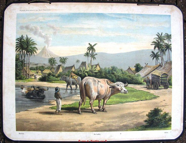 buffel, oude schoolplaten, indie, bali, indonesia,karbouw
