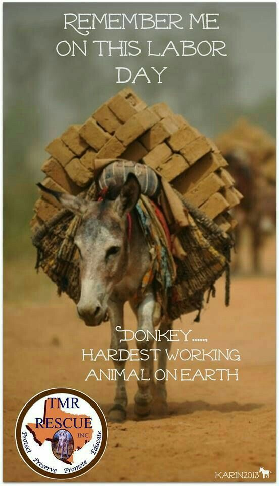 We take so much for granted. ......people, animals, food, technology, air.... We need to appreciate and be thankful for all these things. ...