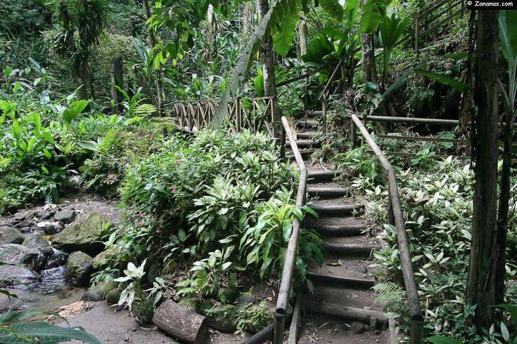 Sentier botanique des Ombrages - Ajoupa-Bouillon - Martinique