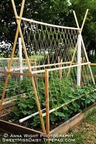 Cucumber trellis and PVC watering system, as well as other useful gardening tips and ideas. #Cake
