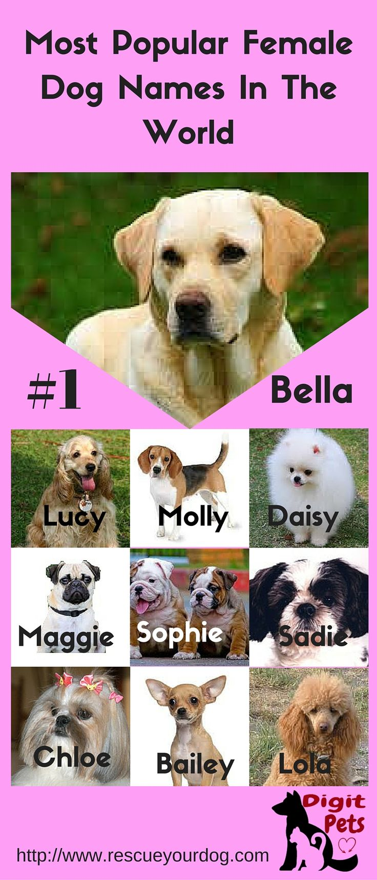 Here s the list of the most popular female dogs names in the world http