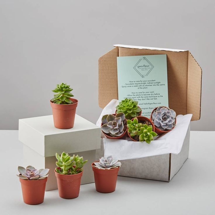 Are you interested in our succulent? With our selection box you need look no further.