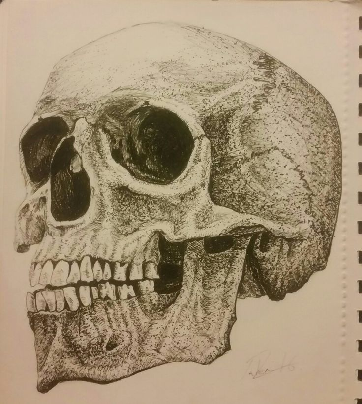 Fine liner pen skull illustration