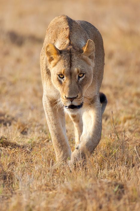 Greater Kruger Area | Andrew Aveley Photographer