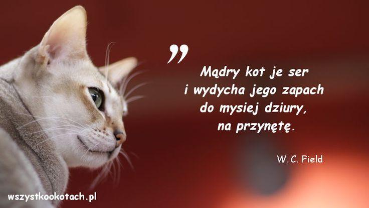 Cytaty o kotach – W. C. Field