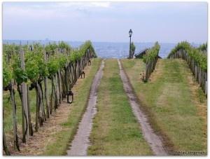 Vinbanken skriver om Gemischter Satz och nämner Ingrid Groiss 2012.
