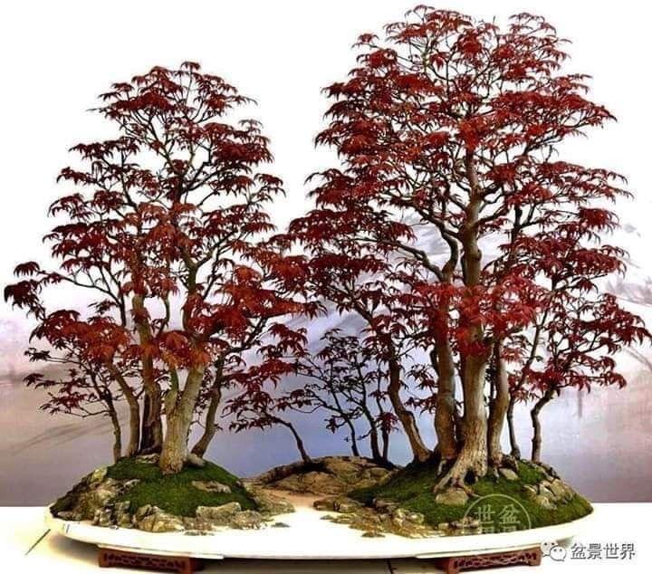 Pin By Putu Artpaint On Bonsai Bonsai Forest Indoor Bonsai Tree Bonsai Tree